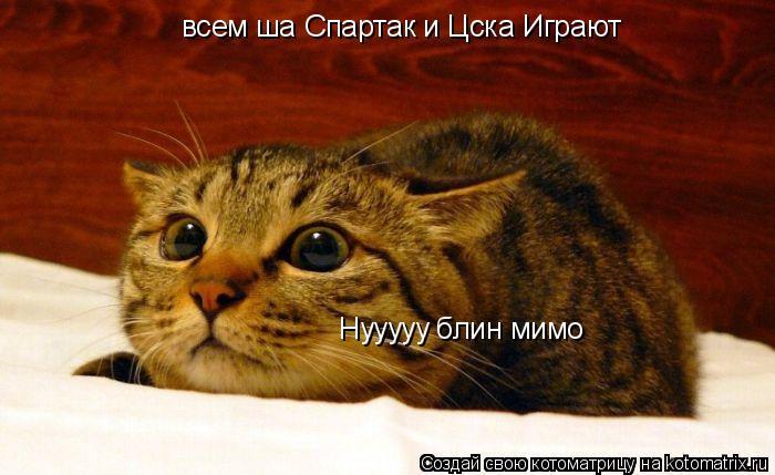 Котоматрица: всем ша Спартак и Цска Играют  Нууууу блин мимо