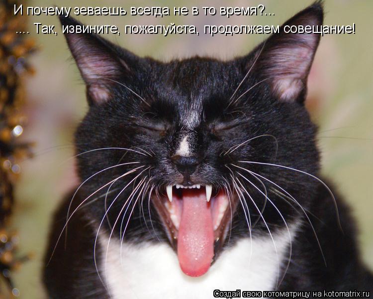 Котоматрица: И почему зеваешь всегда не в то время?... .... Так, извините, пожалуйста, продолжаем совещание!