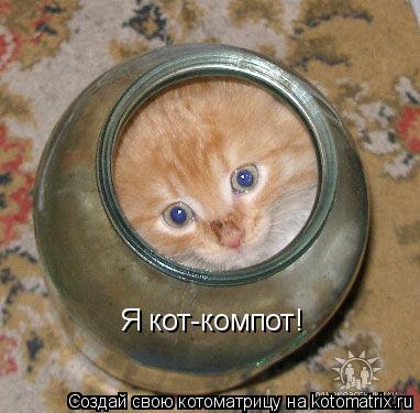 Котоматрица: Я кот-компот!