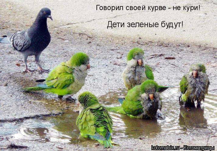 Котоматрица: Говорил своей курве - не кури! Дети зеленые будут!
