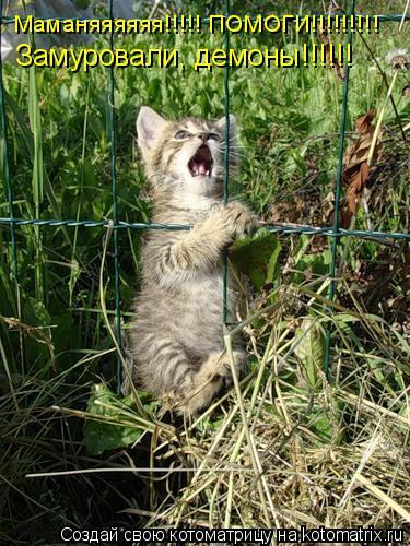 Котоматрица: Маманяяяяяя!!!!! ПОМОГИ!!!!!!!!! Замуровали, демоны!!!!!!