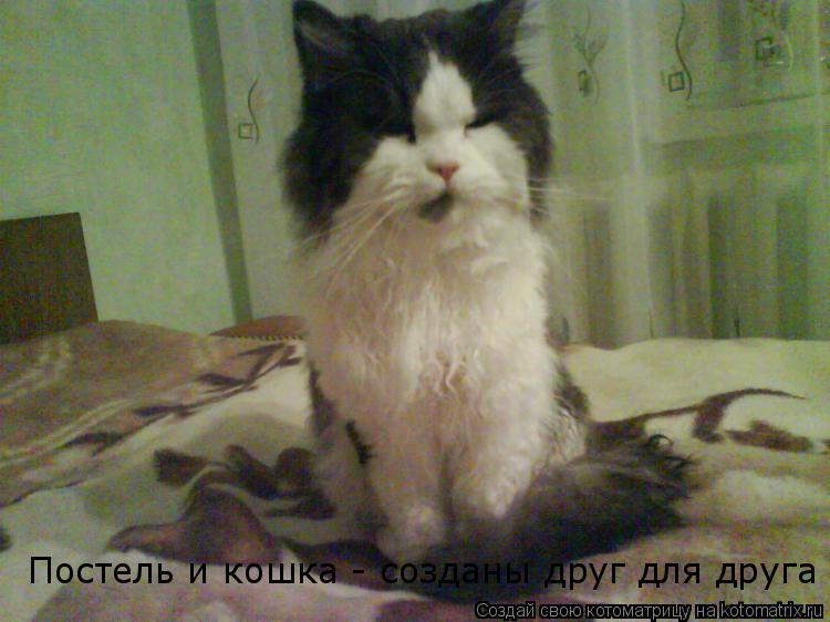 Котоматрица: Постель и кошка - созданы друг для друга