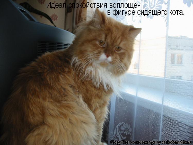 Котоматрица: Идеал спокойствия воплощён  в фигуре сидящего кота.
