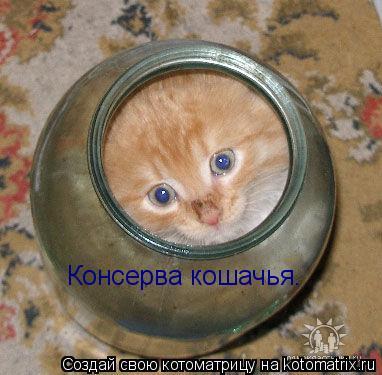Котоматрица: Консерва кошачья.