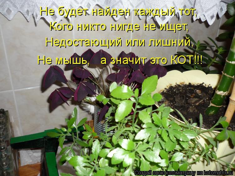 Котоматрица: Не будет найден каждый тот,  Кого никто нигде не ищет, Недостающий или лишний,  Не мышь,   а значит это КОТ!!!