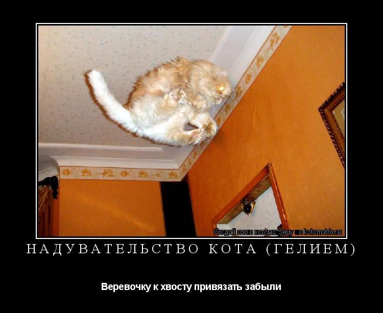 Котоматрица: Надувательство кота (гелием) Веревочку к хвосту привязать забыли