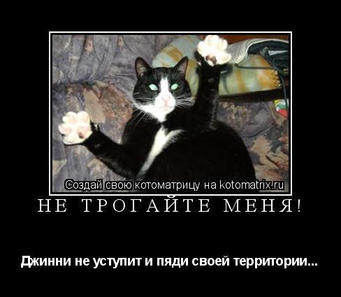 Котоматрица: Не трогайте меня! Джинни не уступит и пяди своей территории...