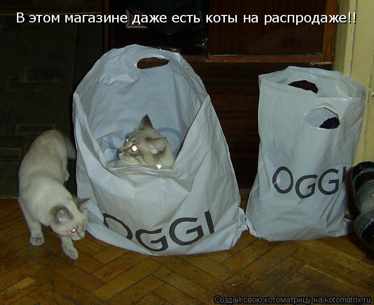 Котоматрица: В этом магазине даже есть коты на распродаже!!
