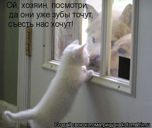 Котоматрица: Ой, хозяин, посмотри,   да они уже зубы точут,  съесть нас хочут!