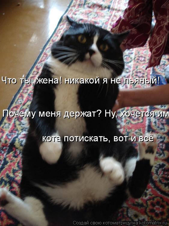 Котоматрица: Что ты, жена! никакой я не пьяный! Почему меня держат? Ну, хочется им  кота потискать, вот и всё