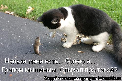 Котоматрица: Нельзя меня есть... болею я... Грипом мышиным. Слыхал про такой?
