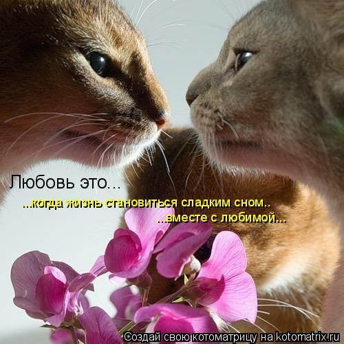 Котоматрица: Любовь это... ...когда жизнь становиться сладким сном.. ...вместе с любимой...