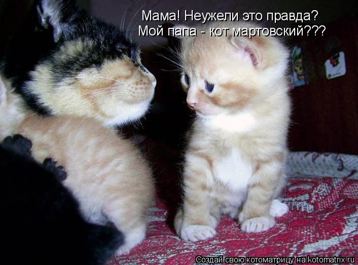 Котоматрица: Мама! Неужели это правда? Мой папа - кот мартовский???