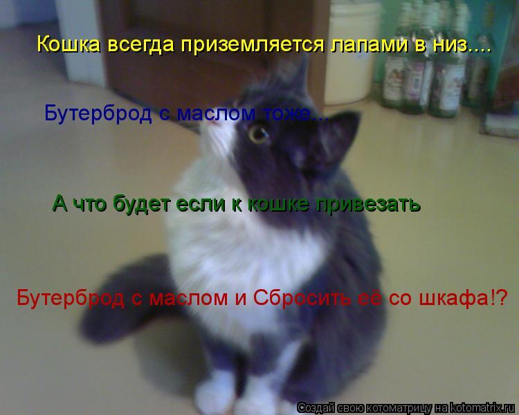 Котоматрица: Кошка всегда приземляется лапами в низ.... Бутерброд с маслом тоже... А что будет если к кошке привезать Бутерброд с маслом и Сбросить её со шк