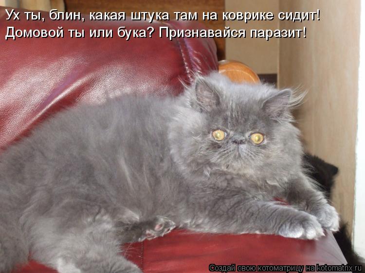 Котоматрица: Ух ты, блин, какая штука там на коврике сидит! Домовой ты или бука? Признавайся паразит!