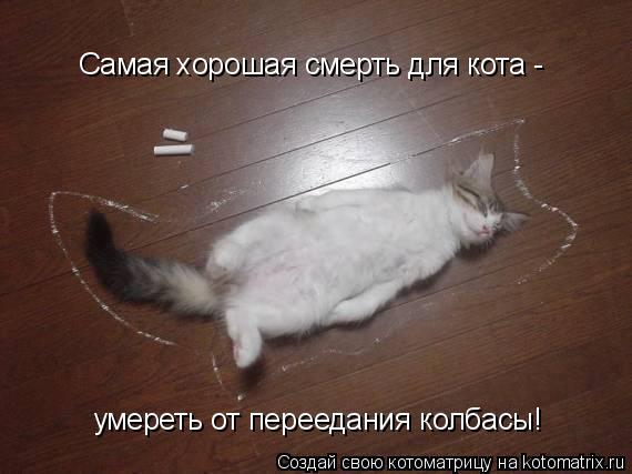 Котоматрица: Самая хорошая смерть для кота -  умереть от переедания колбасы!