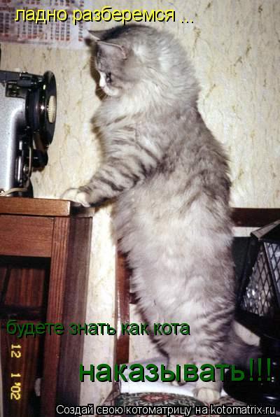 Котоматрица: ладно разберемся  ... будете знать как кота  наказывать!!!