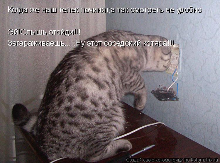 Котоматрица: Когда же наш телек починят,а так смотреть не удобно Эй!Слышь,отойди!!! Загараживаешь.....Ну этот соседский котяра!!!