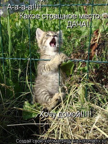 Котоматрица: А-а-а-а!!!! Какое страшное место: ДАЧА!... Хочу домой!!!!!