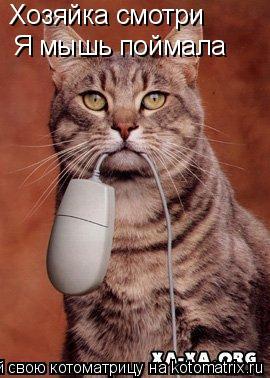 Котоматрица: Хозяйка смотри Я мышь поймала