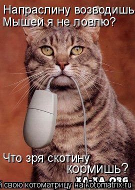 Котоматрица: Напраслину возводишь! Мышей я не ловлю? Что зря скотину кормишь?