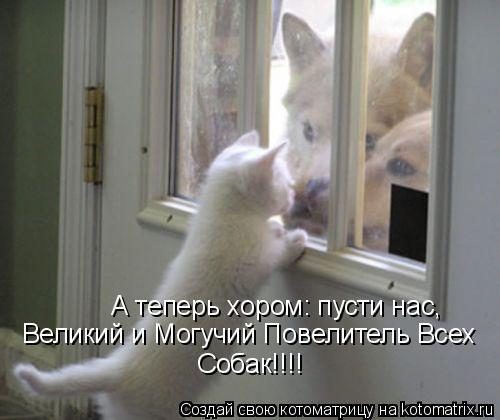 Котоматрица: А теперь хором: пусти нас, Великий и Могучий Повелитель Всех  Собак!!!!