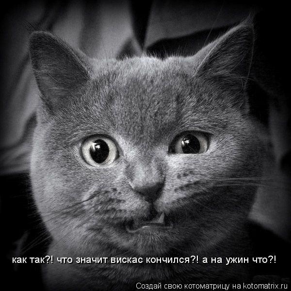 Котоматрица: как так?! что значит вискас кончился?! а на ужин что?! как так?! что значит вискас кончился?! а на ужин что?!