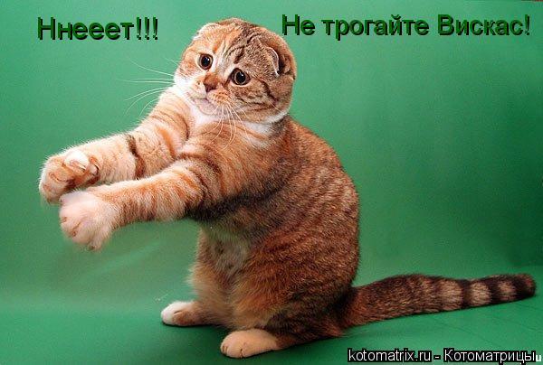 Котоматрица: Ннееет!!!  Не трогайте Вискас!