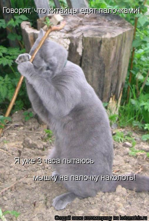 Котоматрица: Говорят, что китайцы едят палочками! Я уже 3 часа пытаюсь мышку на палочку наколоть!