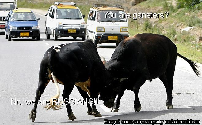 Котоматрица: You are gansters? No, we are RUSSIANS!!