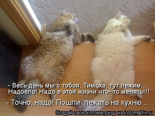 - Весь день мы с тобой, Тимоха, тут лежим... Надоело! Надо в этой жизни что- то менять!!! - Точно, надо! Пошли  лежать на кухню...