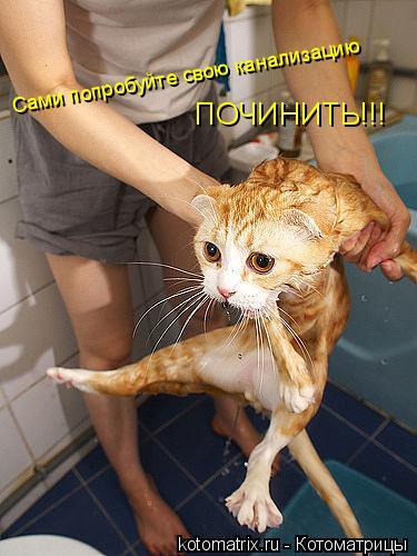 Котоматрица: Сами попробуйте свою канализацию ПОЧИНИТЬ!!!