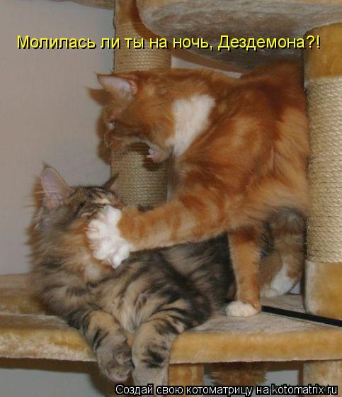 Котоматрица: Молилась ли ты на ночь, Дездемона?!