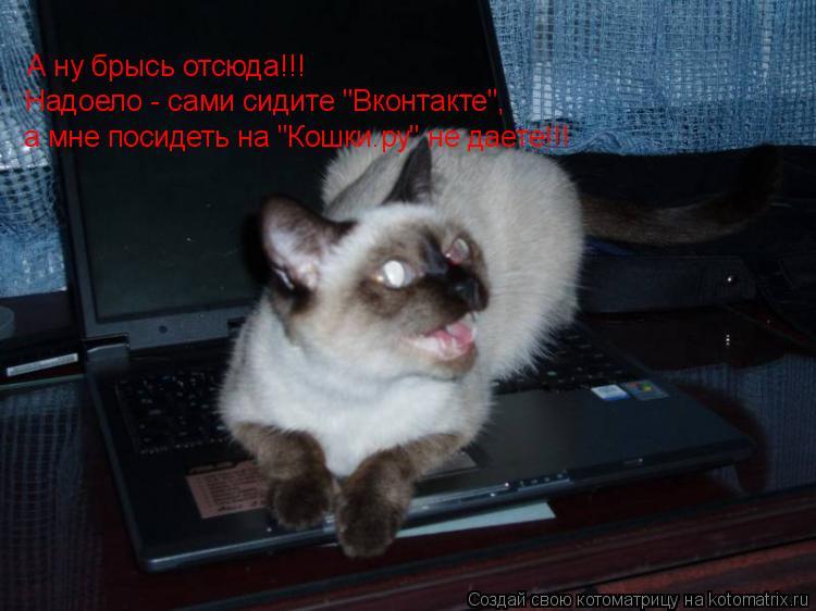 "Котоматрица: А ну брысь отсюда!!! Надоело - сами сидите ""Вконтакте"",  а мне посидеть на ""Кошки.ру"" не даете!!!"