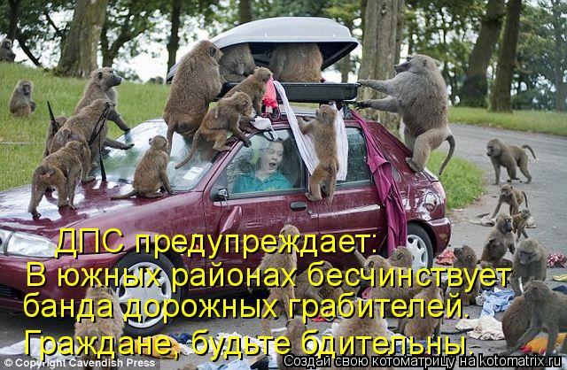 Котоматрица: Граждане, будьте бдительны. ДПС предупреждает: В южных районах бесчинствует  банда дорожных грабителей.