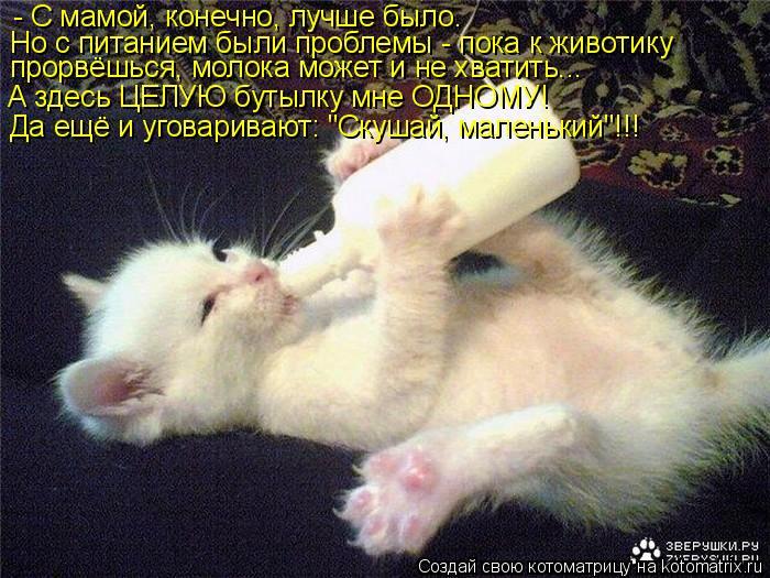 Котоматрица: - С мамой, конечно, лучше было. Но с питанием были проблемы - пока к животику  прорвёшься, молока может и не хватить... А здесь ЦЕЛУЮ бутылку мне