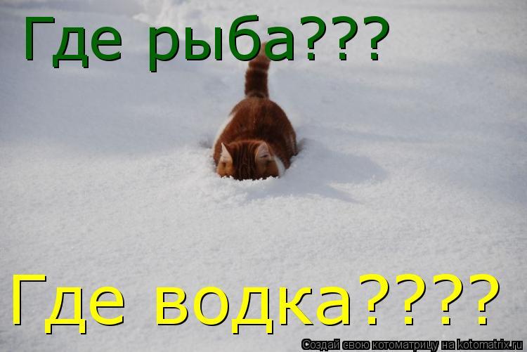 Котоматрица: Где рыба??? Где водка????