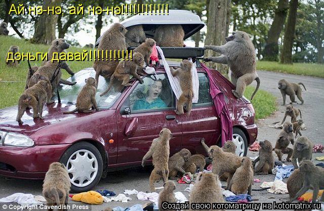 Котоматрица: Ай нэ-нэ, ай нэ-нэ!!!!!!!!!!!! дэньги давай!!!!!!!!!!!