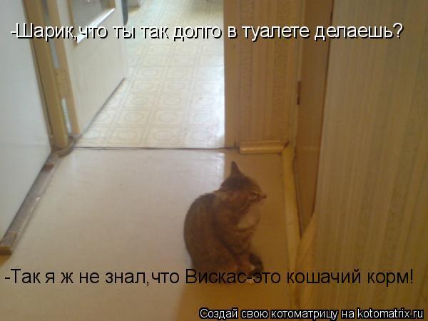 Котоматрица: -Шарик,что ты так долго в туалете делаешь? -Так я ж не знал,что Вискас-это кошачий корм!