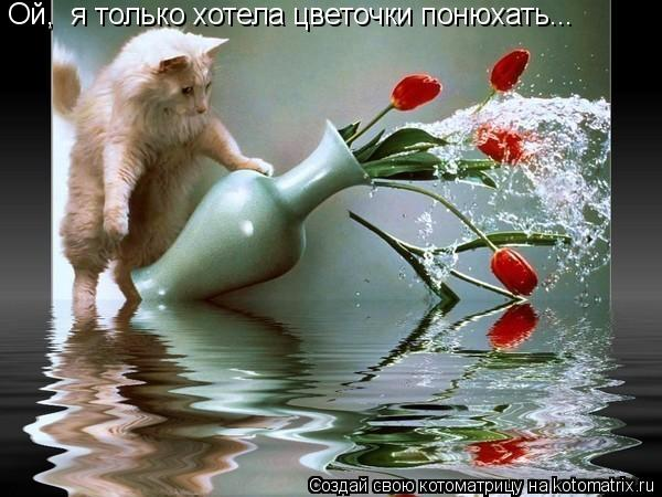Котоматрица: Ой,  я только хотела цветочки понюхать...
