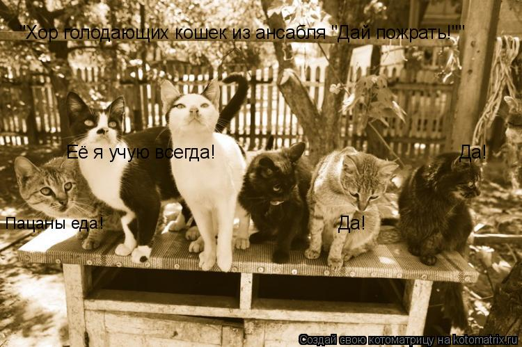 "Котоматрица: ""Хор голодающих кошек из ансабля ""Дай пожрать!"""" Да! Да! Пацаны еда! Её я учую всегда!"