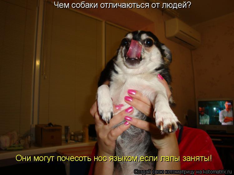 Котоматрица: Чем собаки отличаються от людей? Они могут почесоть нос языком,если лапы заняты!