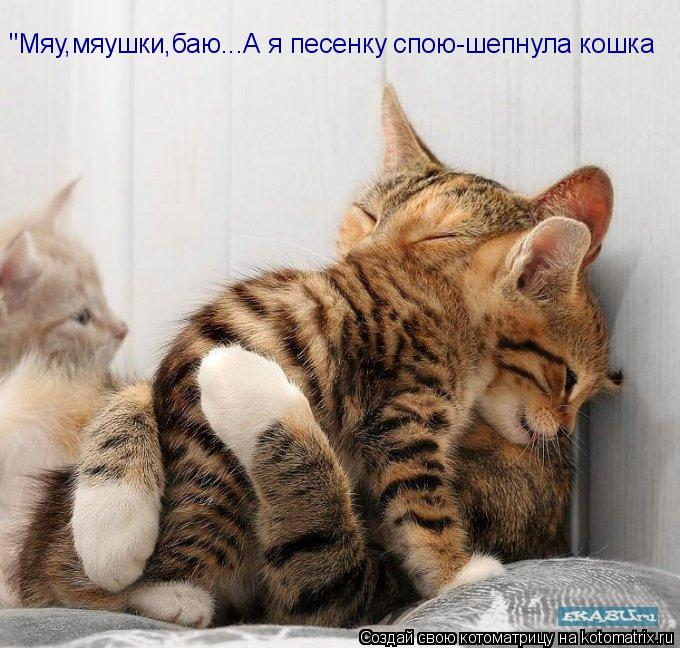 """Котоматрица: """"Мяу,мяушки,баю...А я песенку спою-шепнула кошка"""
