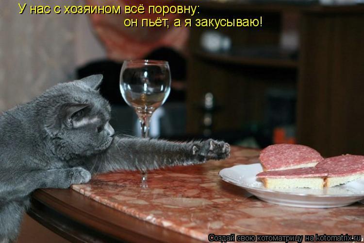 Котоматрица: У нас с хозяином всё поровну: он пьёт, а я закусываю!