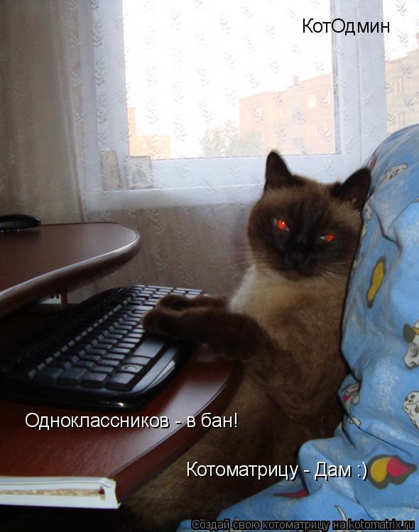 Котоматрица: КотОдмин Одноклассников - в бан! Котоматрицу - Дам :)
