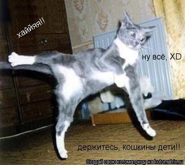 Котоматрица: хаййяя!! ну всё, ХD держитесь, кошкины дети!!