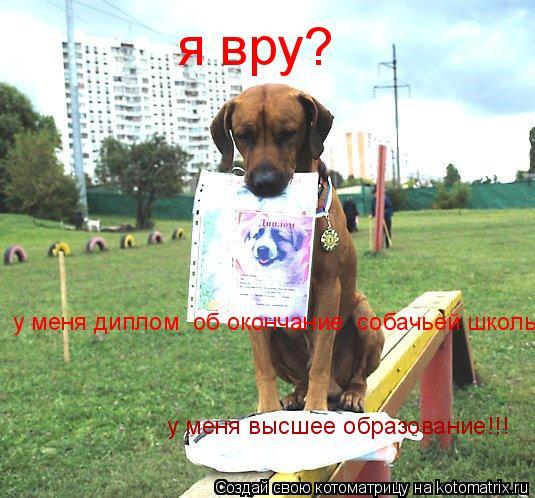 Котоматрица: я вру? у меня диплом  об окончание  собачьей школы у меня высшее образование!!!