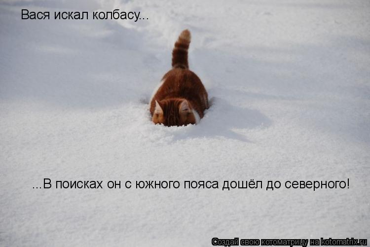 Котоматрица: Вася искал колбасу... ...В поисках он с южного пояса дошёл до северного!