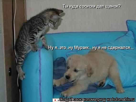 Котоматрица: Ты куда сосиски дел щенок? Ну я..это..ну Мурзик.. ну я не сдержался...