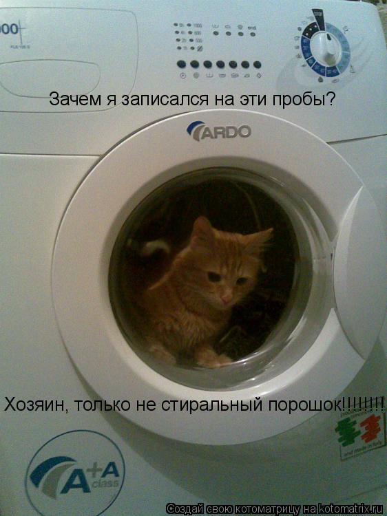 Котоматрица: Зачем я записался на эти пробы? Хозяин, только не стиральный порошок!!!!!!!!!!!!!!!!